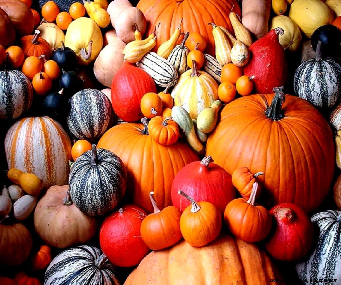 pumpkin Computer Wallpapers Desktop Backgrounds  1280x1024  ID