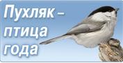 Птица- символ 2017 года.