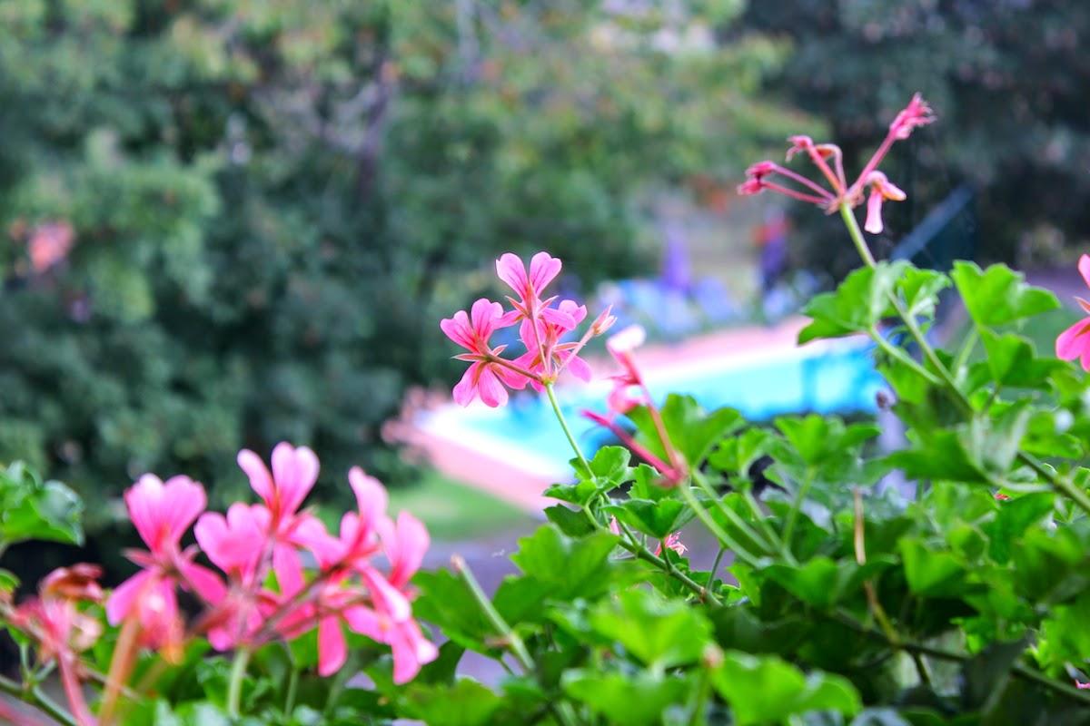 Dal mio balcone al Podere Casale: i gerani rosa e la piscina - foto di Elisa Chisana Hoshi