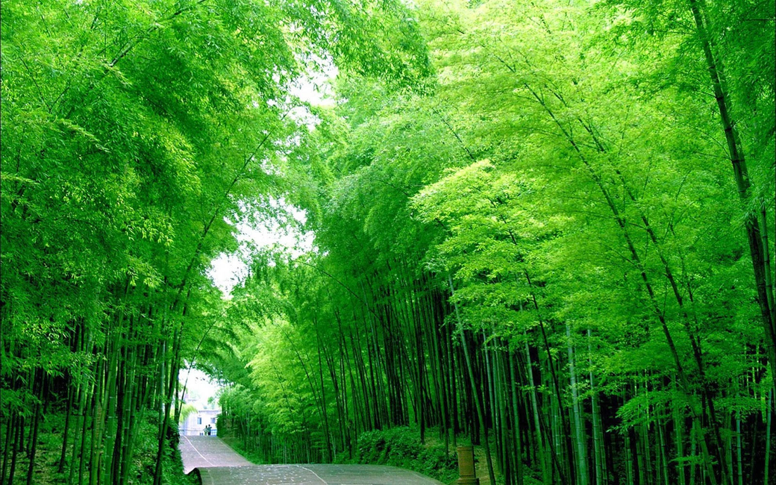 Bamboo Wallpapers Collections