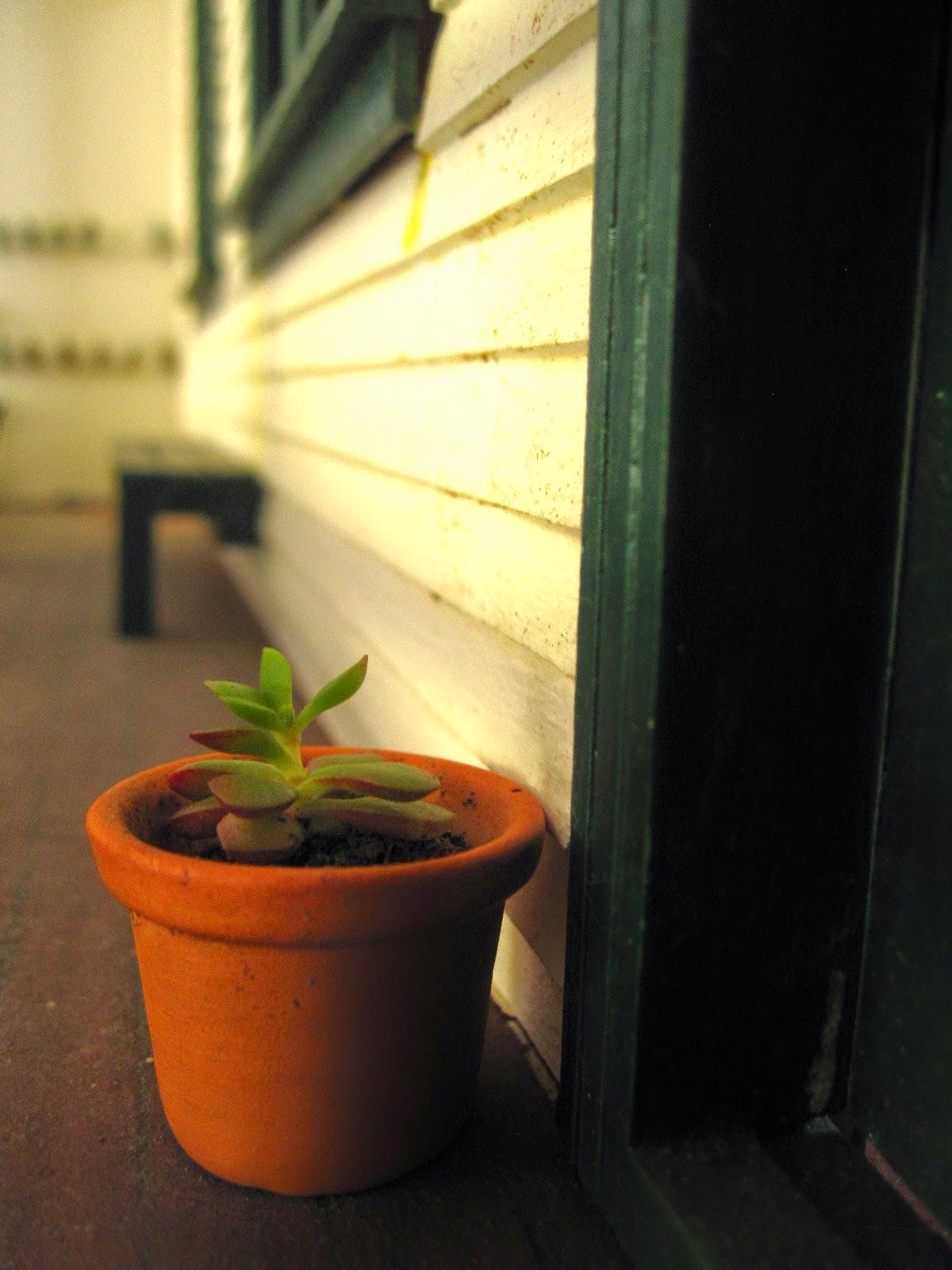 Miniature succulent in a pot on the verandah of a miniature school.