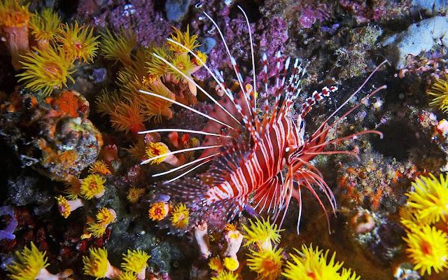 Imagenes de Peces Raros en Arrecifes de Coral