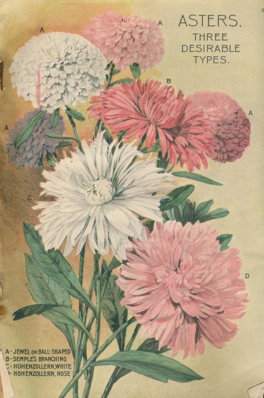 http://3.bp.blogspot.com/-oBG8exz4aUE/U5MH1XVMfCI/AAAAAAAAOfc/zIq2glSh-YQ/s1600/flower.cv.jpg