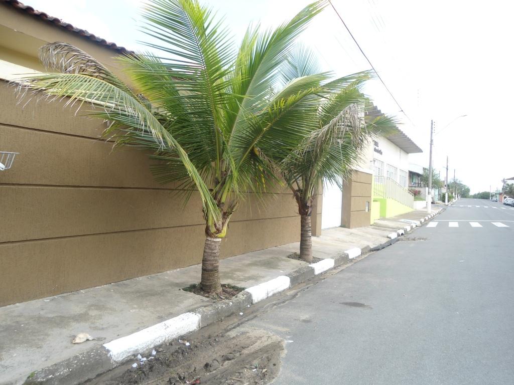 roubo de anao de jardim : roubo de anao de jardim:Plantacao De Coqueiros Em Jadim Anao