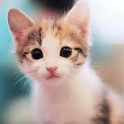 Foto Kucing Lucu Imut dan Menggemaskan 28