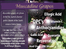 Click on picture below for Premium Muscadine Grape Seed Products Info: