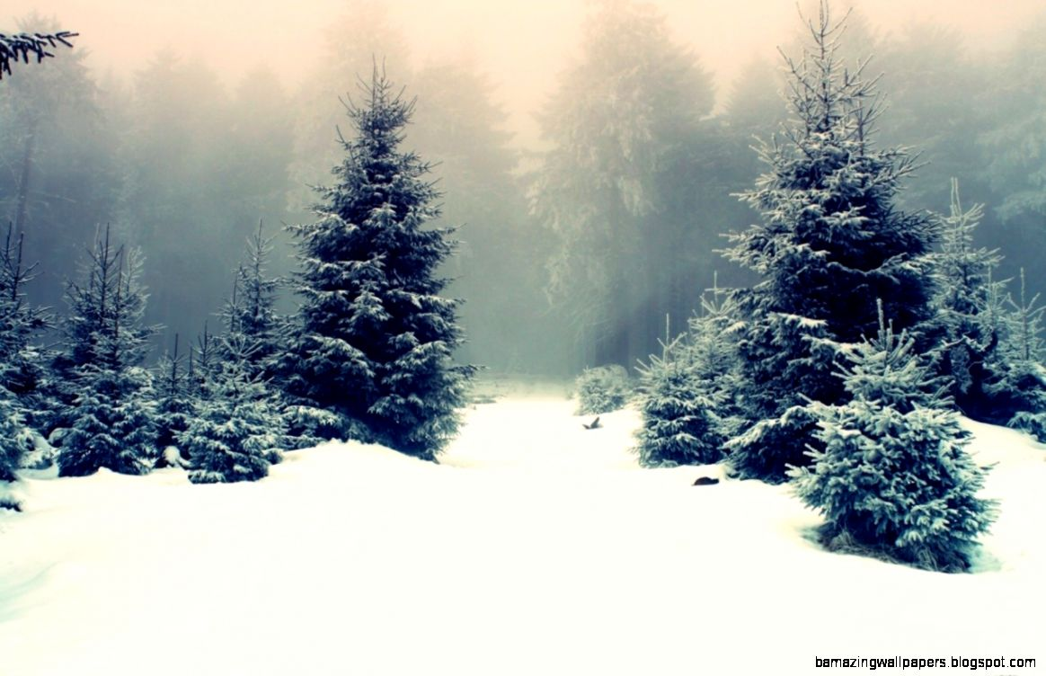 Snowy pine tree 2122551