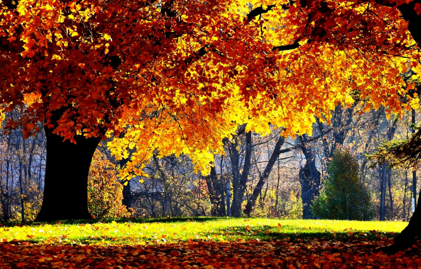 Fall Scenery Wallpapers   Wallpaper Cave