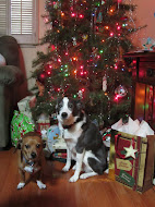 Doggies by the Christmas Tree