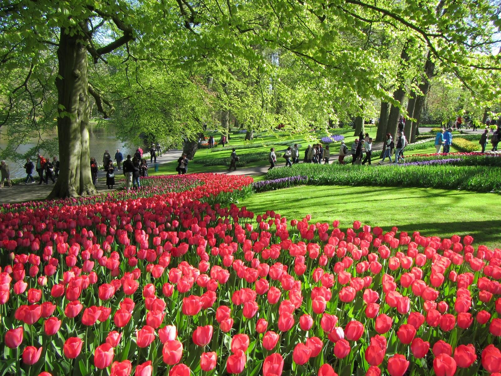 mar de rosas, nos sentimos mergulhados num mar de tulipas