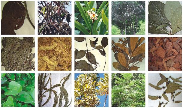 PLANTAS MEDICINAISFITOMEDICINA Propriedades das plantas medicinais