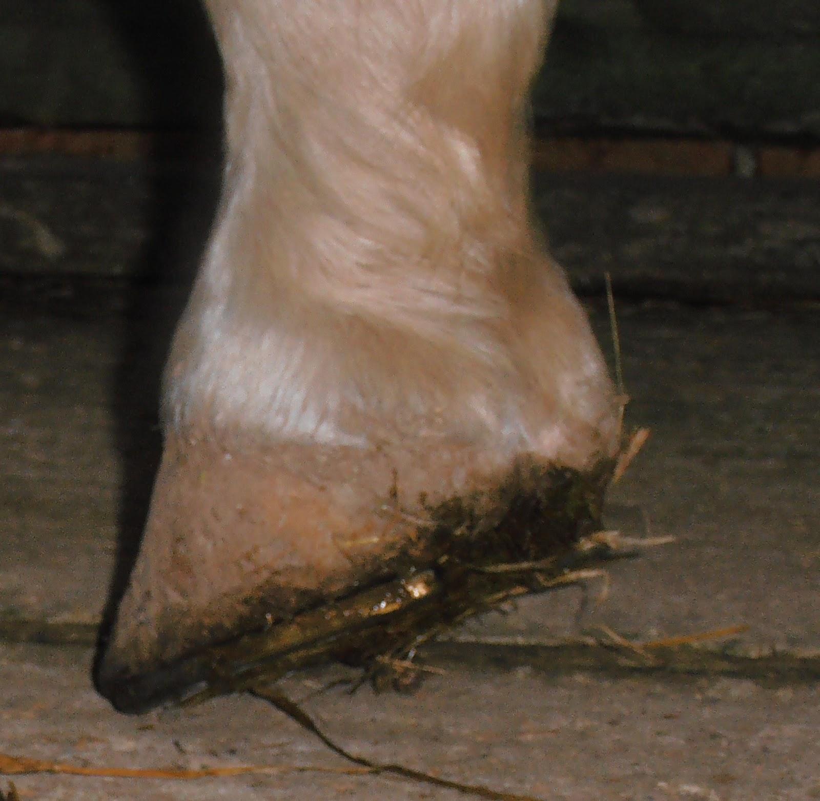 Barefoot Horse Blog: December 2011
