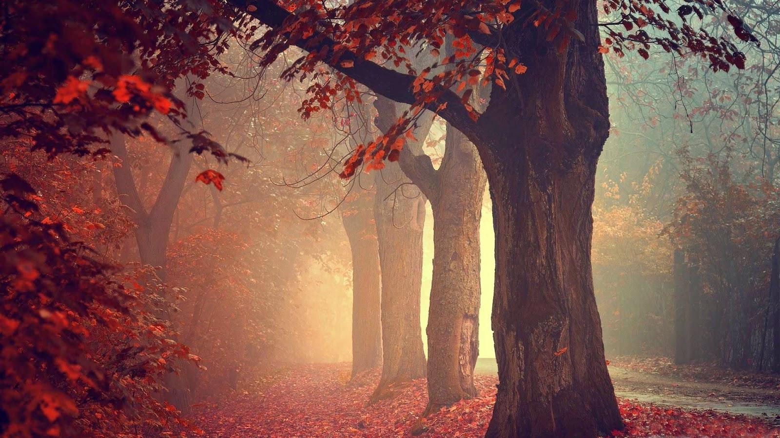 Papel de Parede Natureza Outono nature wallpaper hd image