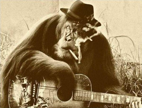 Gorila fumante tocando violão