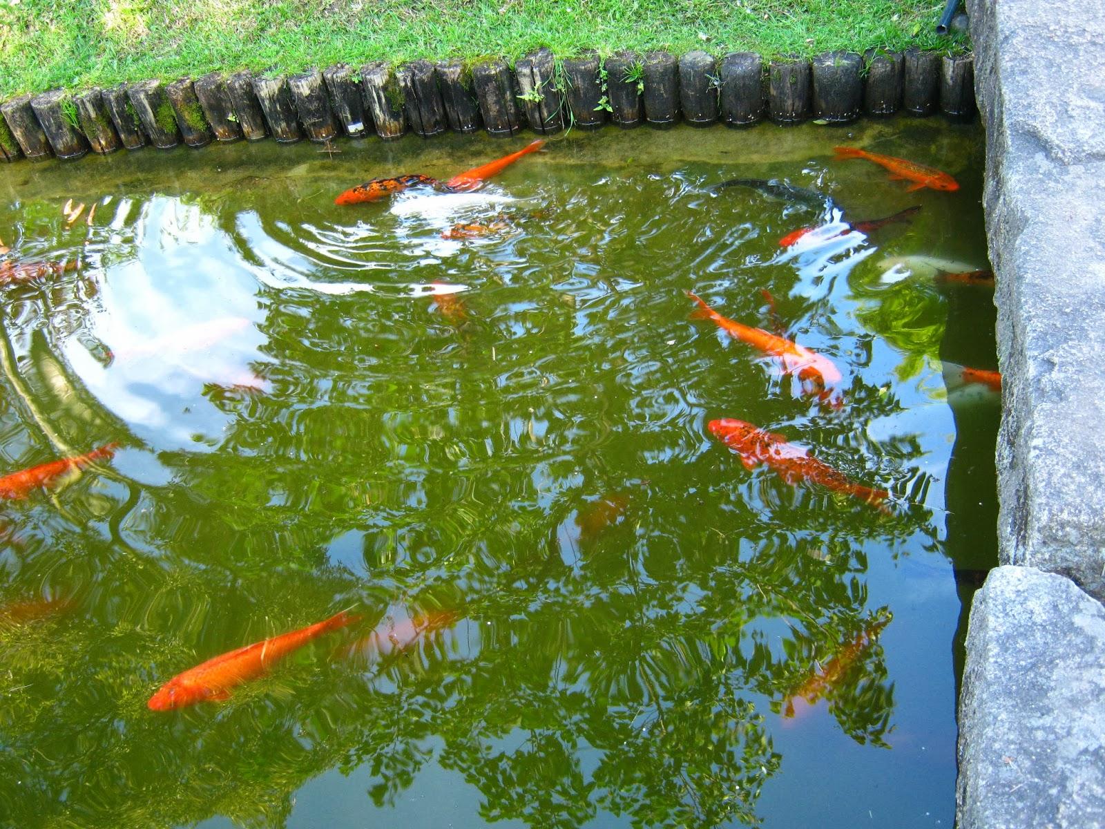 Fotos uruguay jardin japones montevideo for Jardines pequenos tipo japones