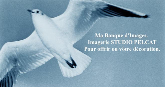 Imagerie Studio PELCAT - Cliquez sur la Mouette !