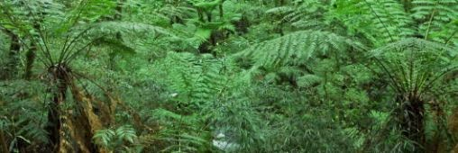 les-plantations-d'arbres-sur-la-planete