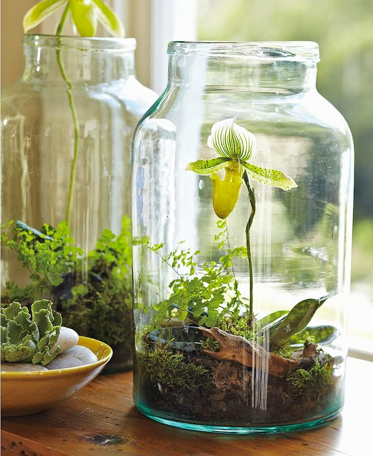 30 Awesome DIY Projects that You've Never Heard of - Jar Garden Mini Terrarium