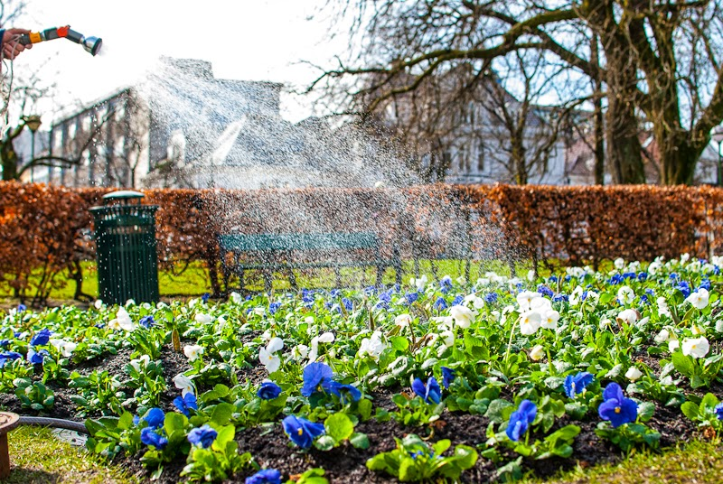picture of watering flowers in the spring bergen norway