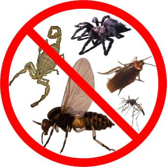 Agricultura ecologica for Control de plagas sevilla
