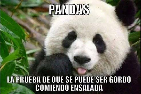 Pandas gorditos