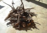 http://www.delimajelita.com/2010/05/pembekal-tongkat-ali-hitam.html
