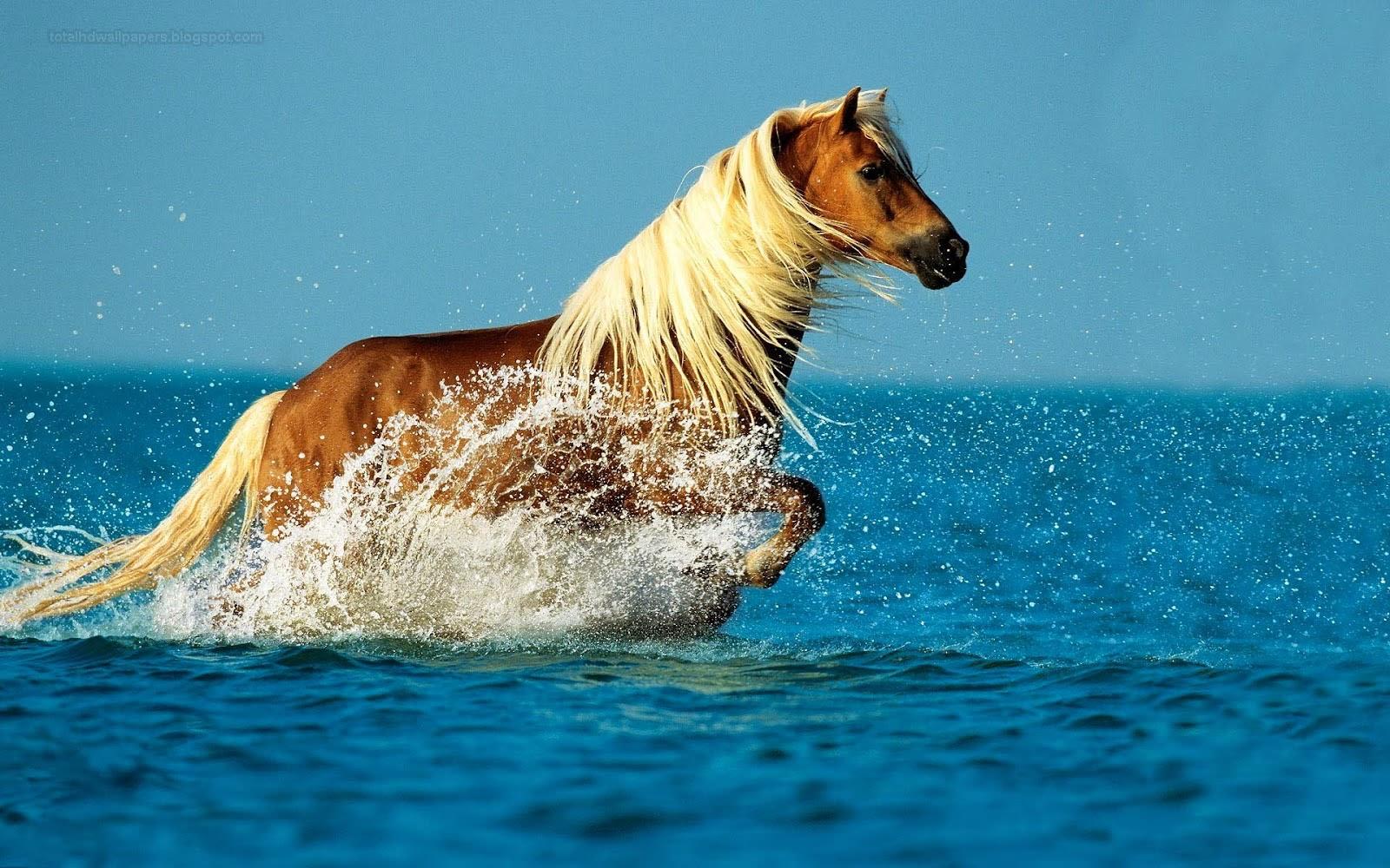 Fantastic   Wallpaper Horse Water - horse+wallpapers+hd+(3)  Pic_452392.jpg