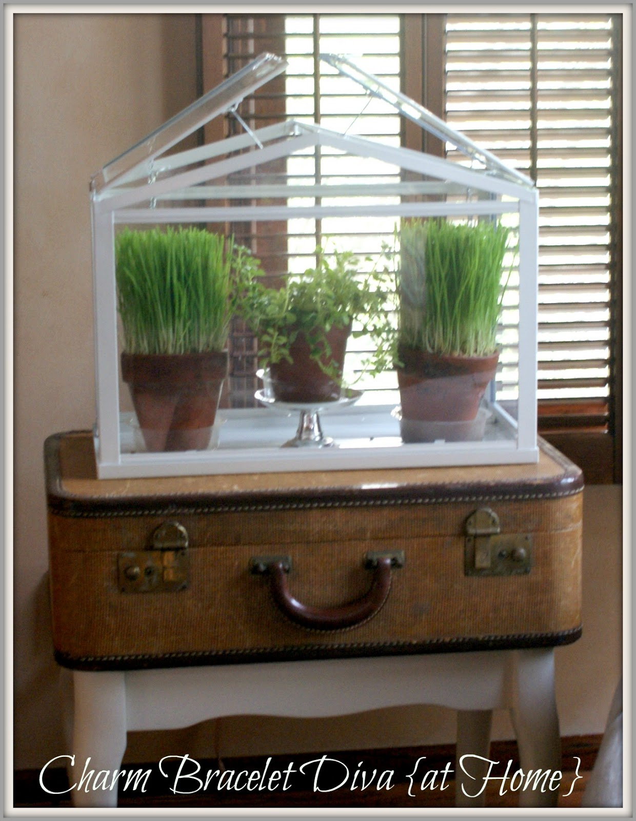 Our hopeful home wheat grass decor 101 for Ornamental grass that looks like wheat