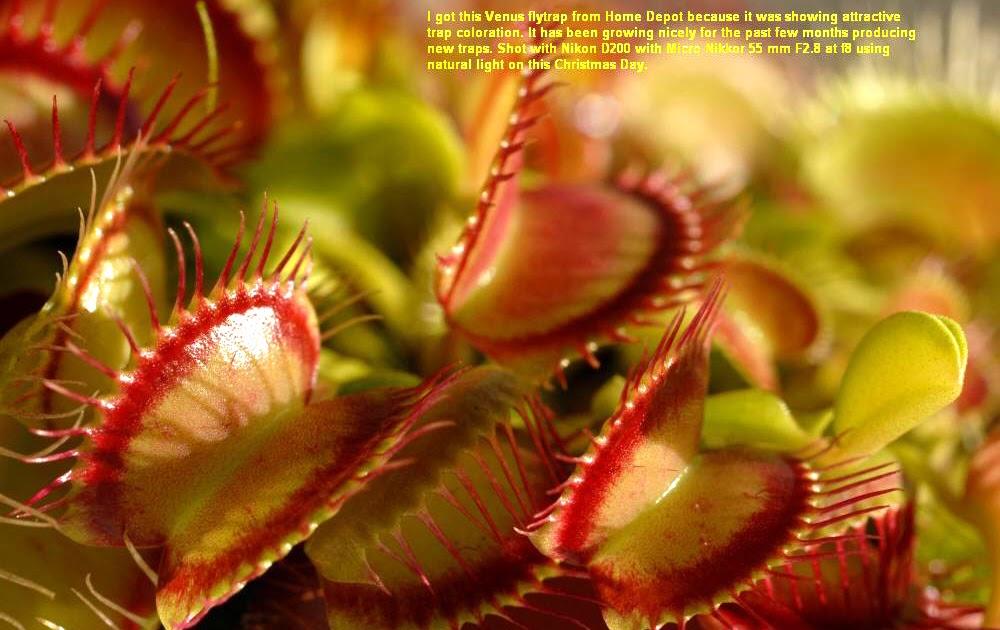 Examples Of Insectivores Biology: Heterotrophic...
