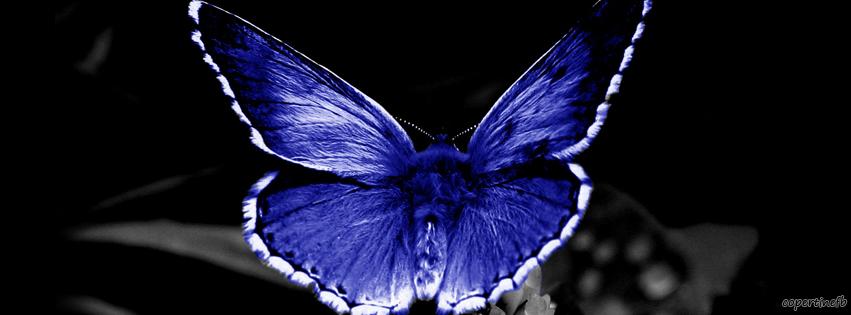 Copertine facebook farfalla blu - Immagini di farfalle a colori ...