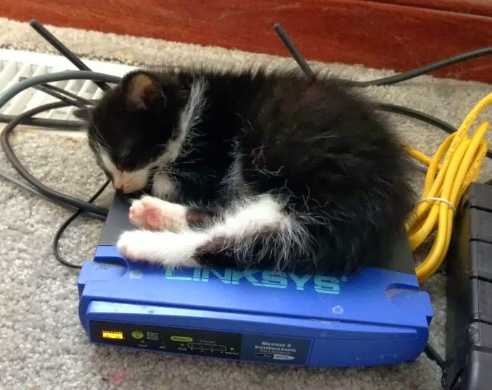 Funny cats - part 84 (40 pics + 10 gifs), kitten sleeping on warm modem