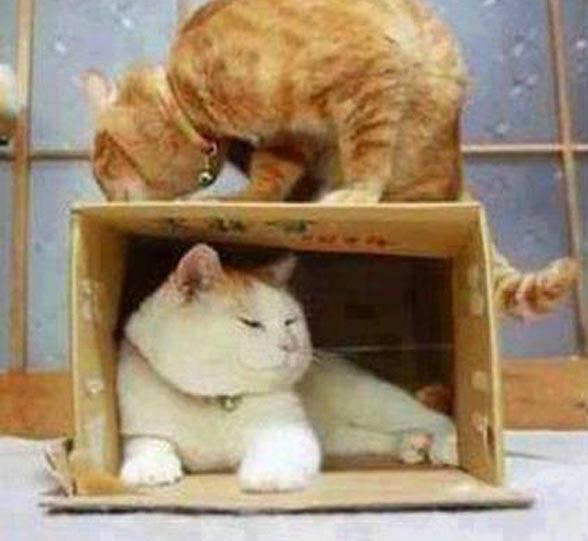 Vem pra caixa!!!