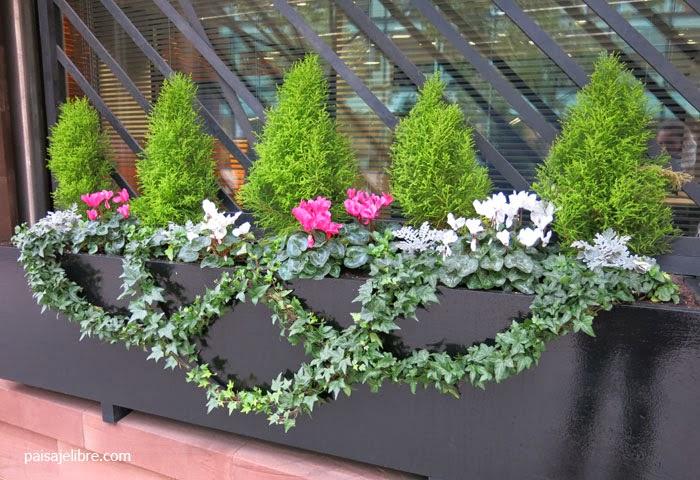de plantas para jardineras en invierno