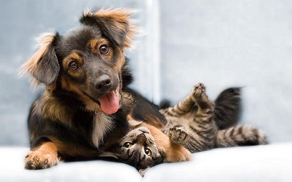 A encantadora e inusitada amizade entre cães e gatos