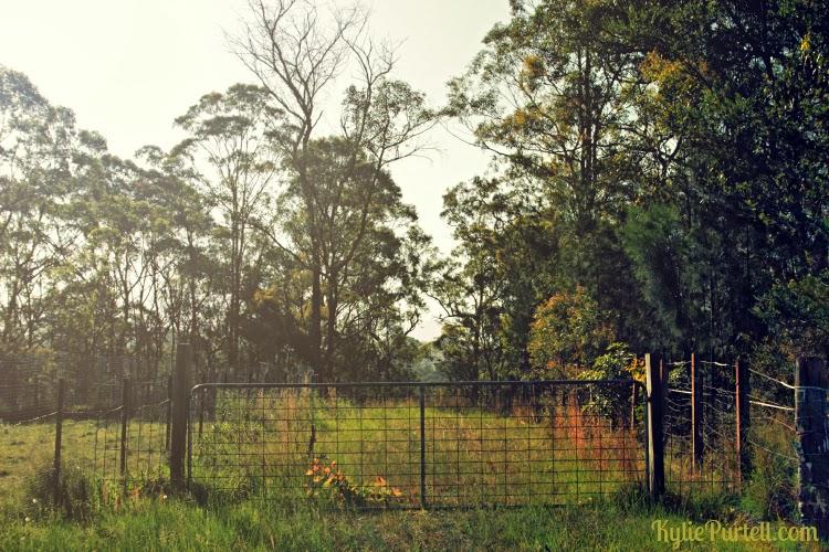 hawkesbury farm gate, hawkesbury photography