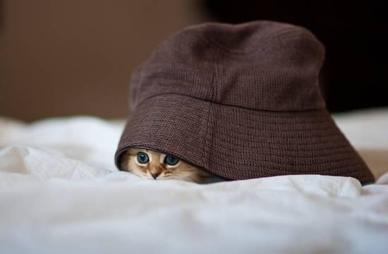 anak-kucing-dalam-topi