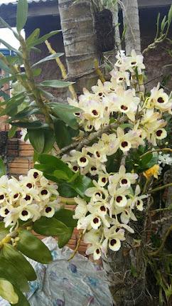 Orquídea da amiga Cida...