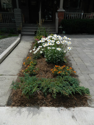 Leslieville front garden renovation after Paul Jung Toronto Gardening Services