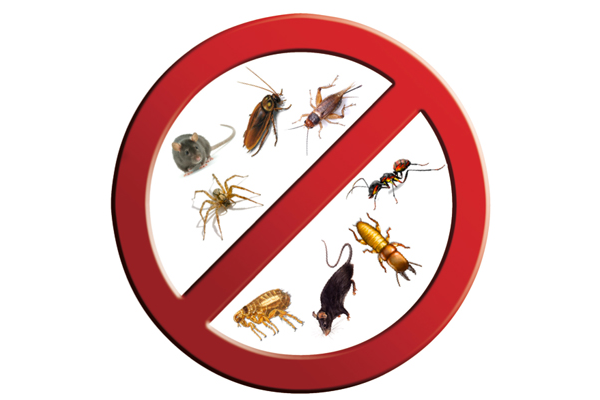 Different Pest Control Techniques And on pest control logo ideas