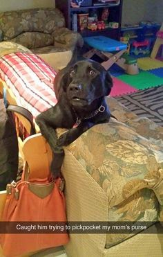Funny dog stealing from mom purse and get caught