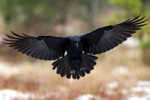 Raven Flight Nude Photos 74