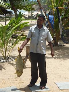 pêche miraculeuse de Tangalle