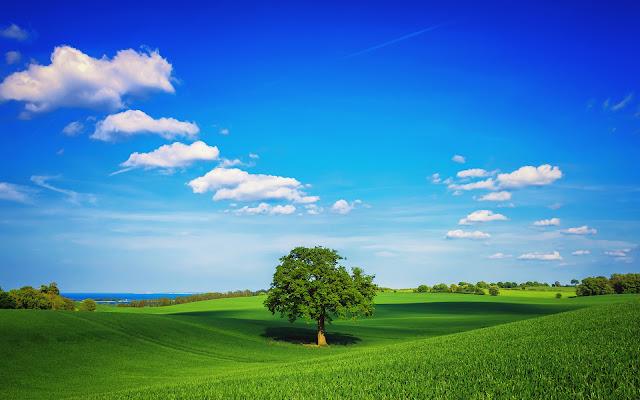 Paisajes Naturales de Primavera en HD