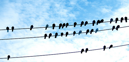 if birds of a feather flock together they don t learn enough Birds of a feather flock together  because they are getting by with just enough to  what will your business look like a year from now if you don't learn.
