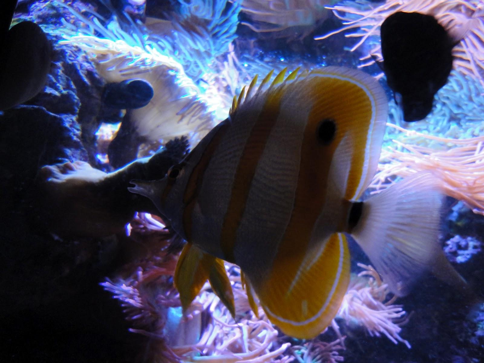 Life as we know it: Kingdom Animalia Vertebrates