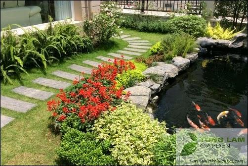 Thiết kế hồ cá Koi đẹp, sân vườn Splendora với hồ cá Koi mini, cá Koi Nhật thân thiện