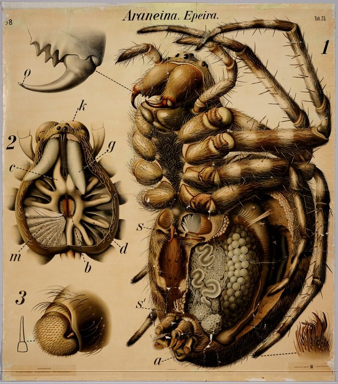 Insect Anatomy Travel Boy