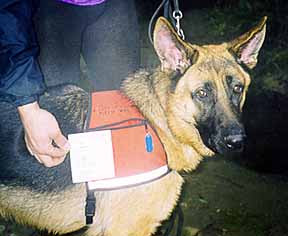 Search and Rescue Dog Czar training in his ID Cape dog vest.