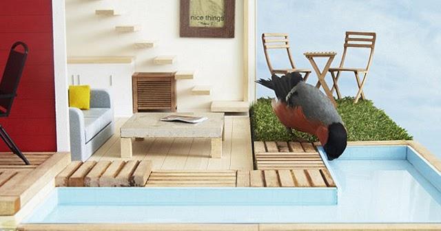 foto unik rumah burung terbaik di dunia lengkap dengan