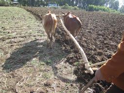 Maanviljelys on pääelinkeino